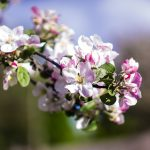 Spring Health Watch: What to Look Out For This Season